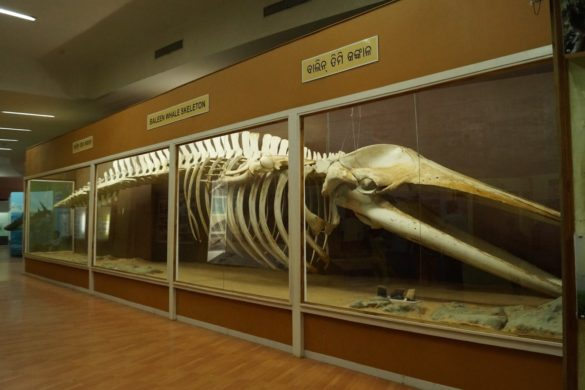Regional Museum of Natural History, Bhubaneswar: Visit for the Whale Skeletons