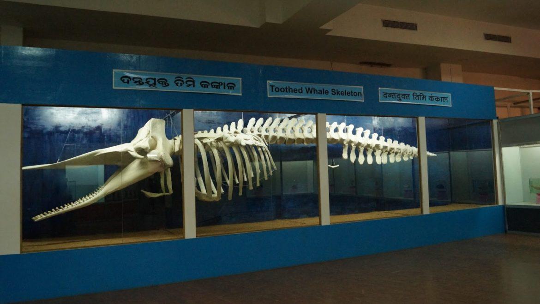 Regional Museum of Natural History, Bhubaneswar, Odisha
